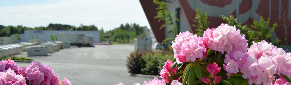 Heiane blomst